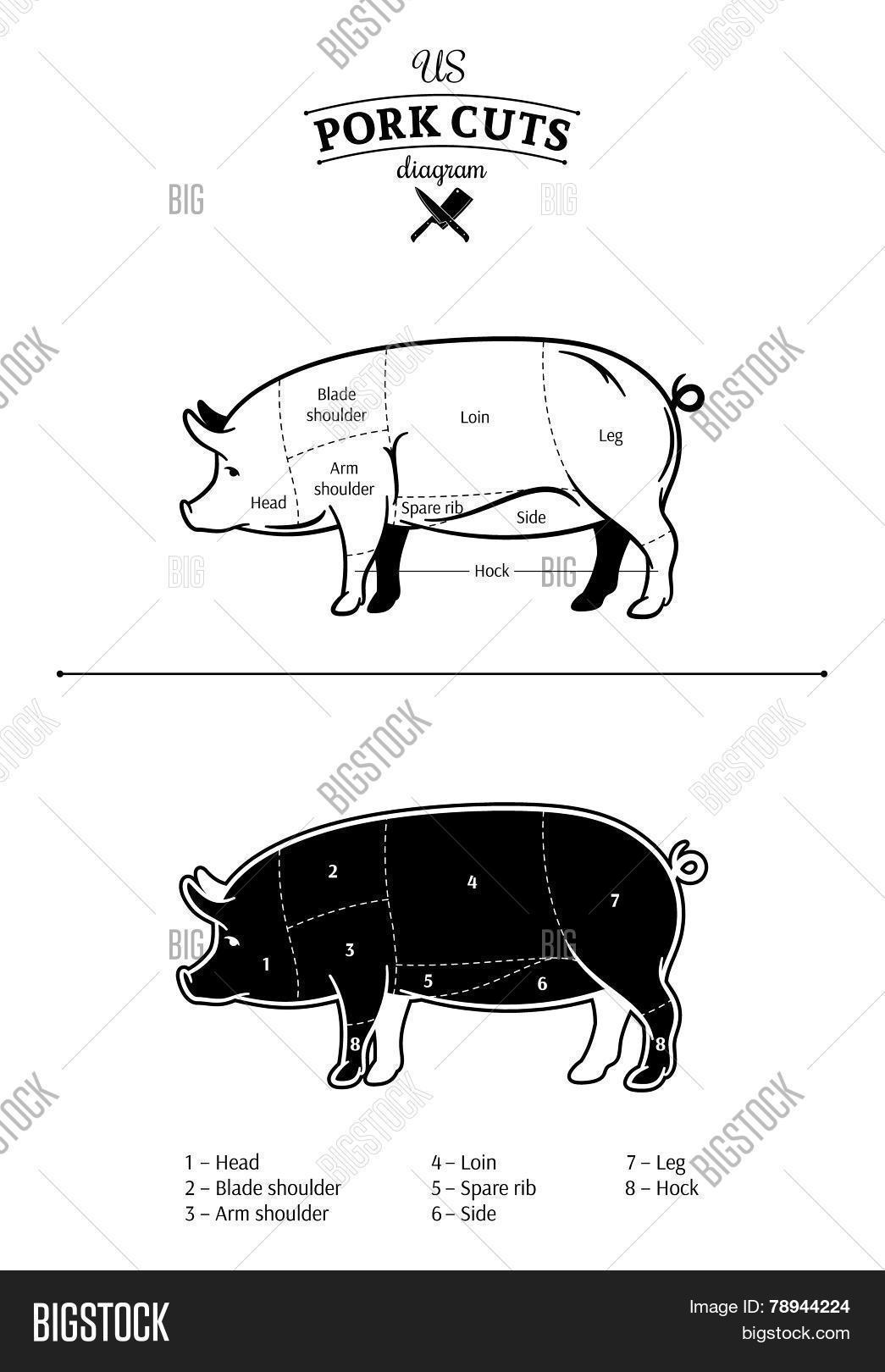 hight resolution of vector american us cuts of pork diagram