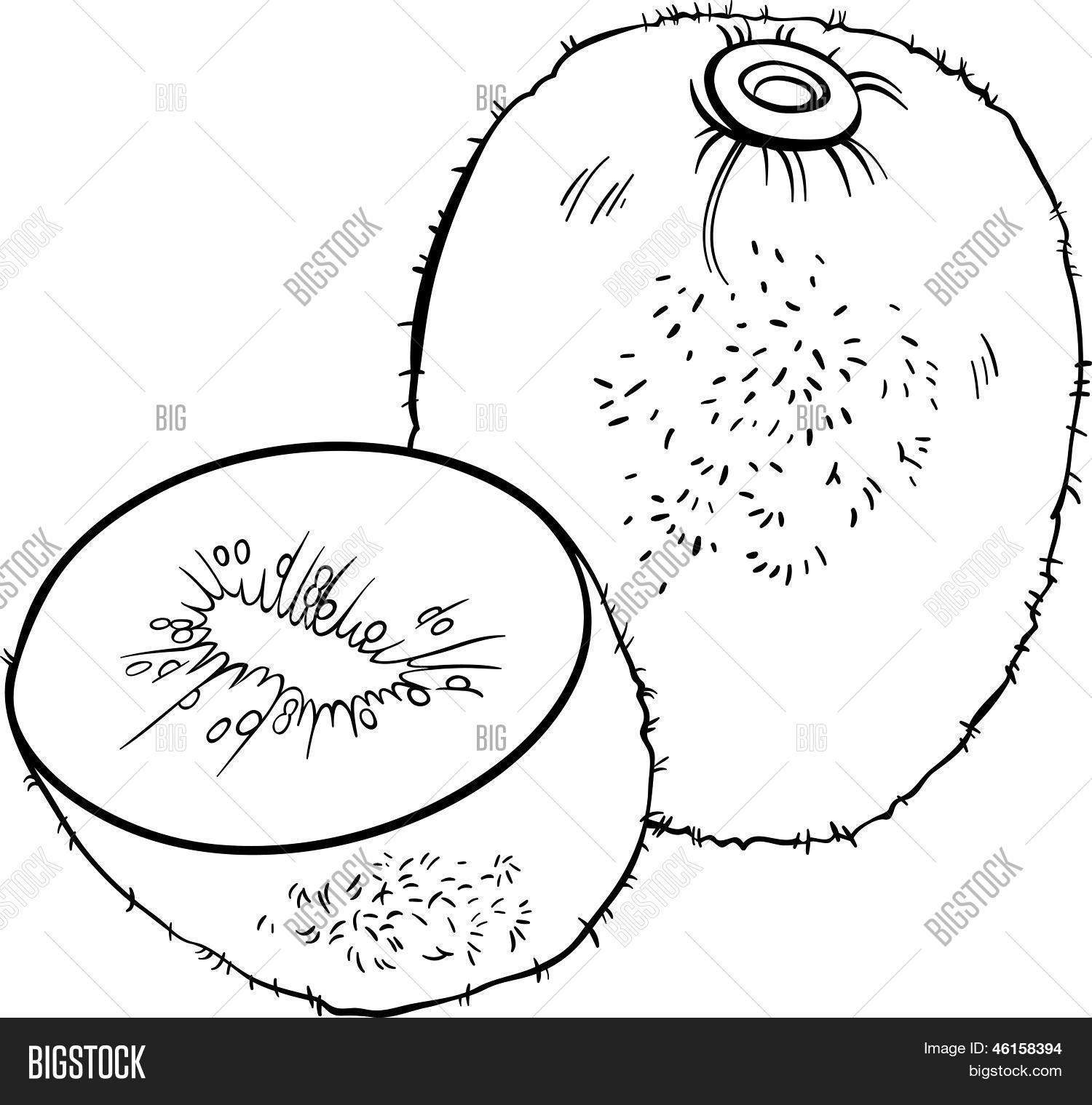 Ilustração de fruta Kiwi para colorir livro Bancos de