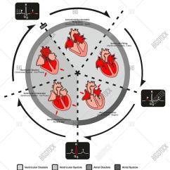 Large Heart Diagram Label Fan Center Wiring Cardiac Cycle Diastole And Systole Of Human Anatomy
