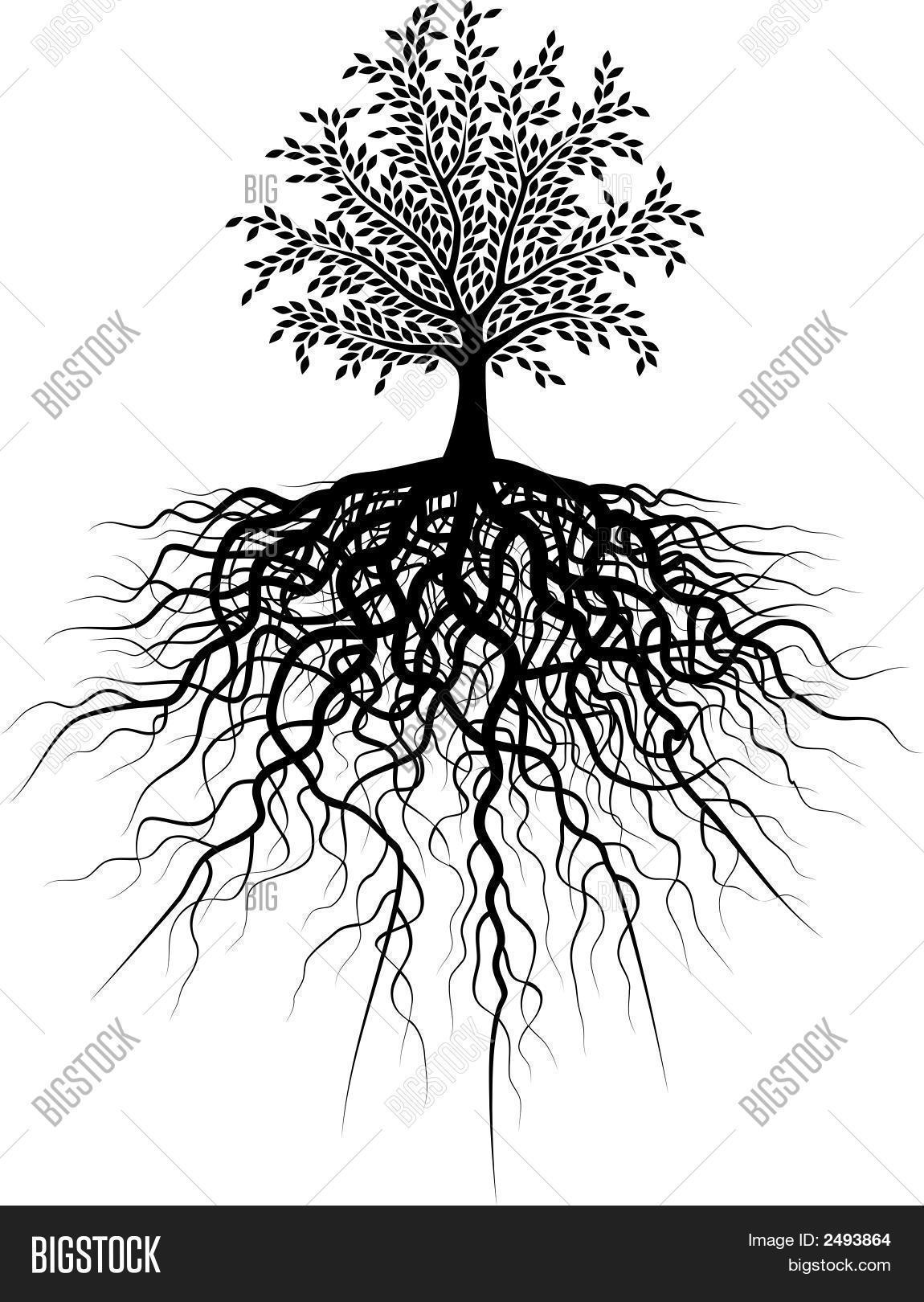 Root Tree Vector Amp Photo