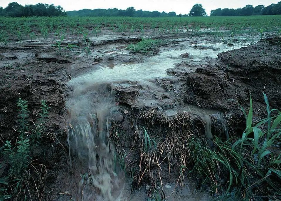 But although conservation and recycling will help, they won't fix the problem. Because a huge amount of phosphorus will still be lost to runoff. Phosphate that isn't consumed by plants leaches out of the soil into rivers and then to the ocean.