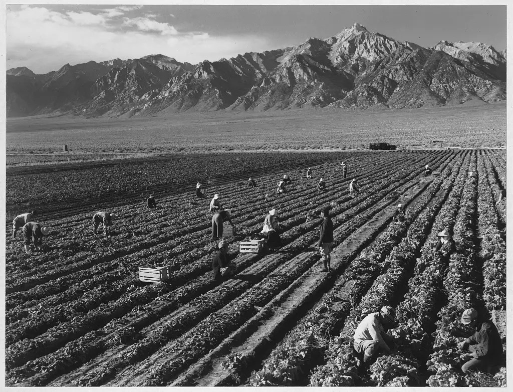 Images of the fields at Manzanar are beautiful.