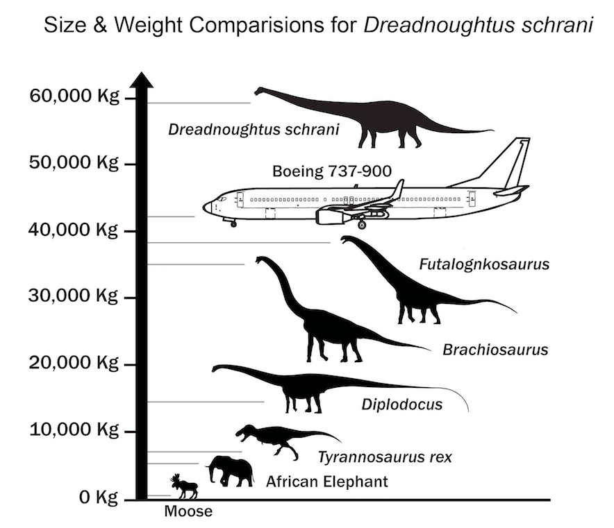 Dreadnoughtus size and weight comparsion