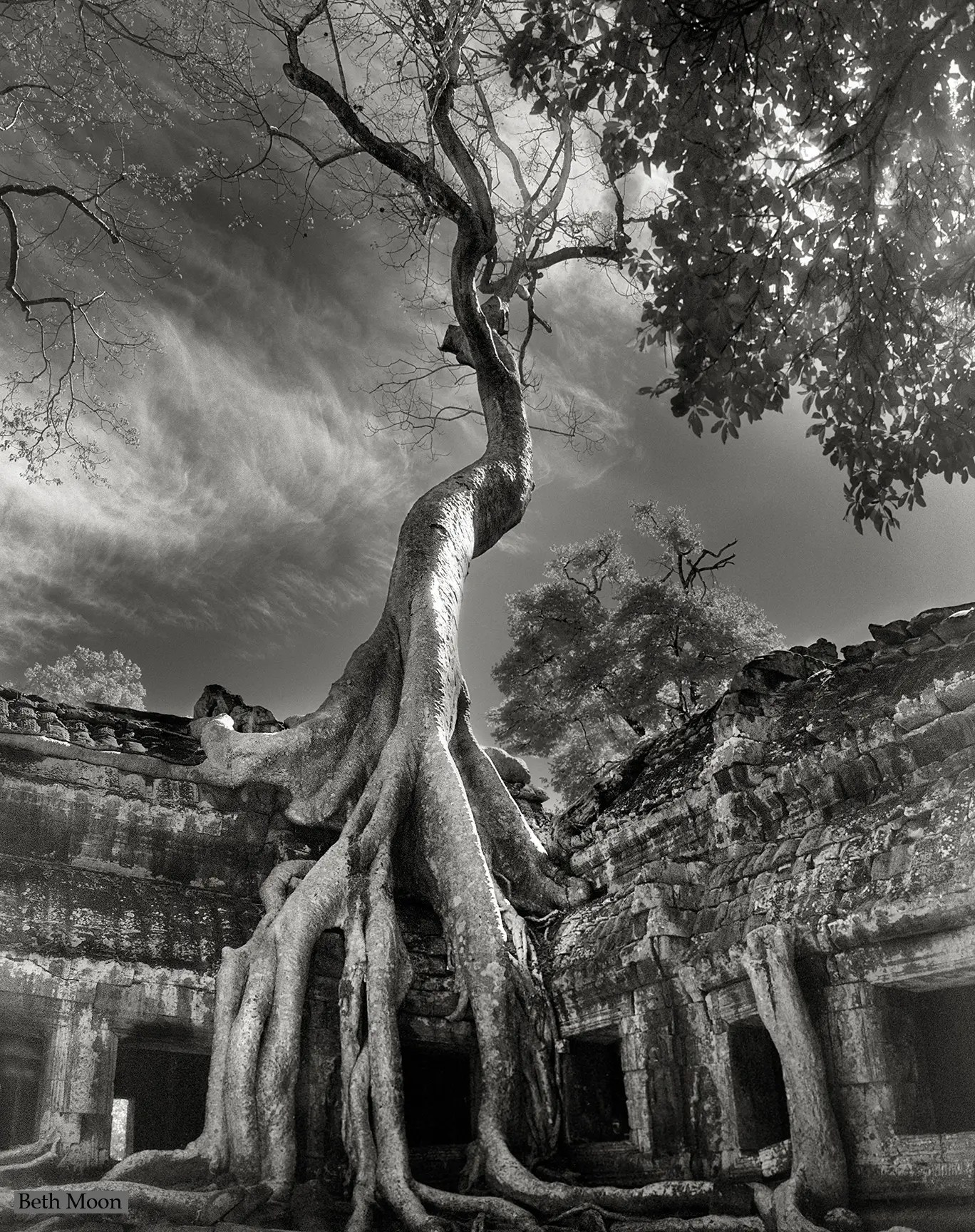 This tree, known as Rilke's Banyon, grow around a Buddhist temple in Siem Reap, Cambodia. The trees can grow 150 feet or taller, and their roots can work to tear up the ancient stone work of the building as they search for soil.