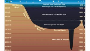 Incredible facts about the deep ocean  Business Insider