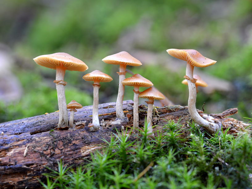 Image result for mushrooms