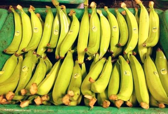 Different properties of plantain