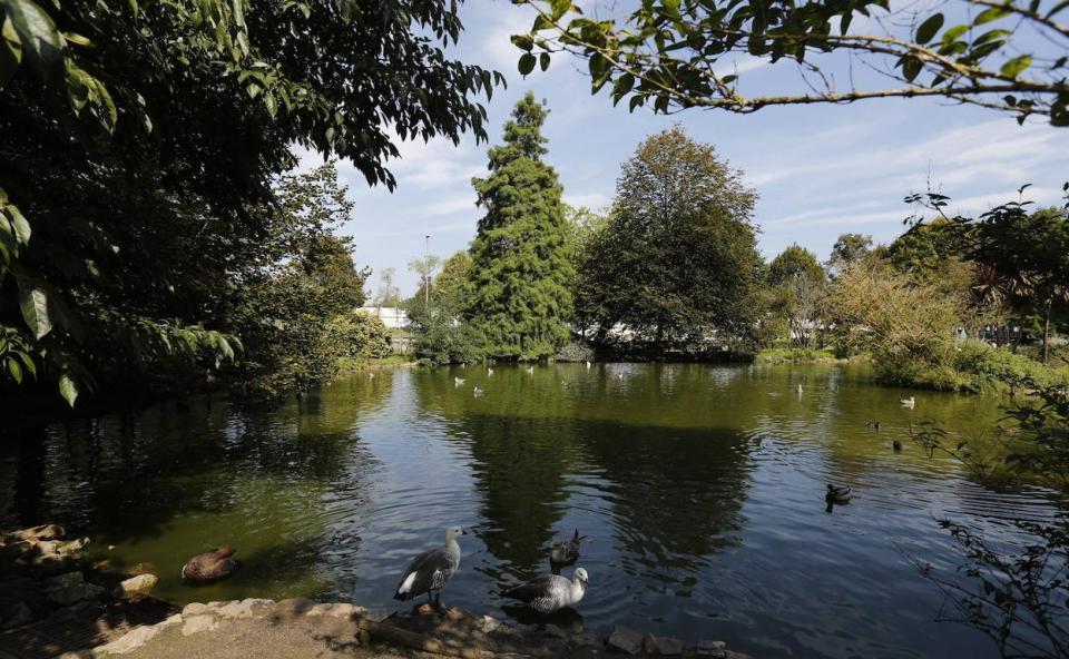 Gijón invertirá 1,6 millones de euros en el parque Isabel La ...