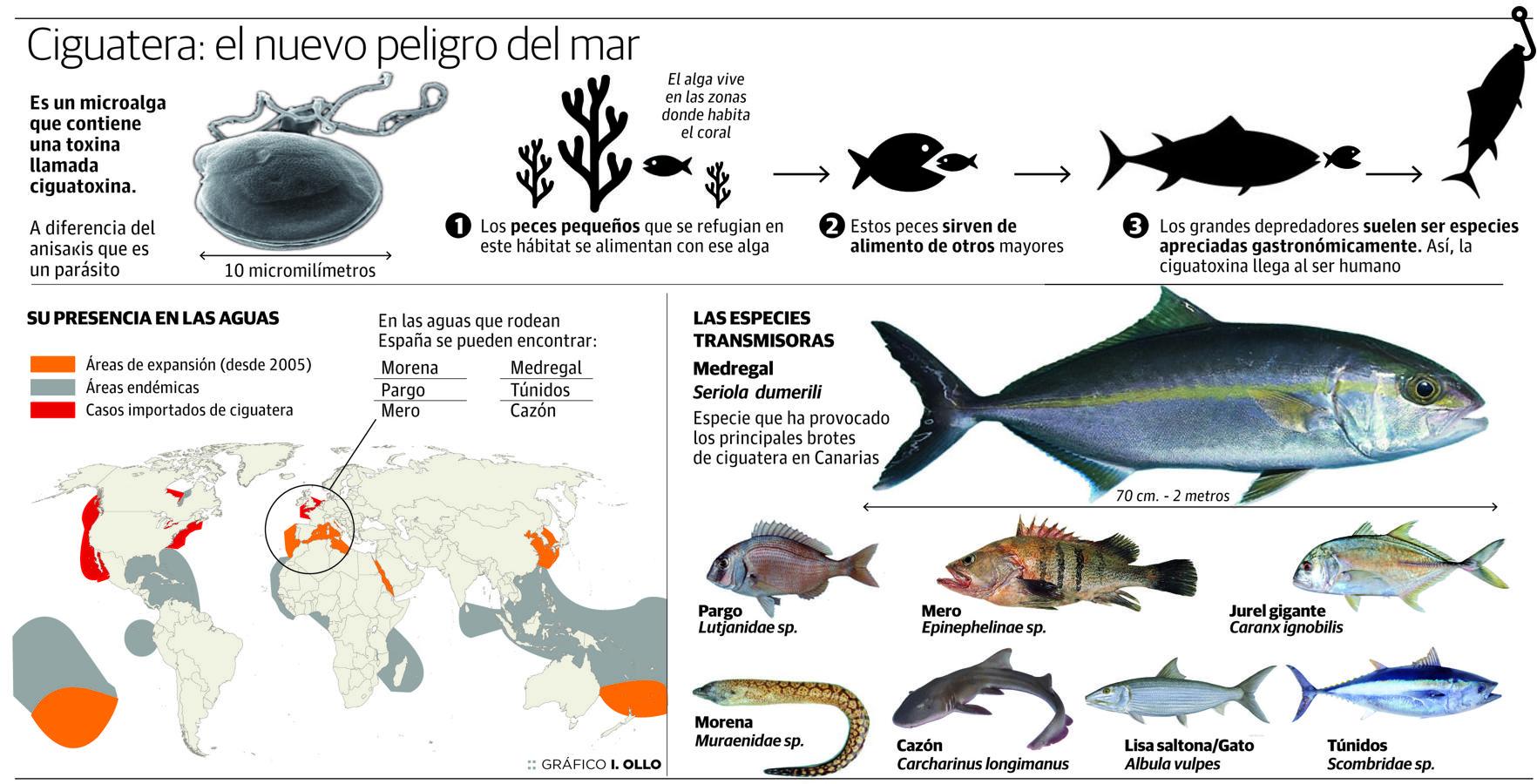 Resultado de imagen de peces que nos pueden causar ciguatera