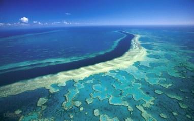 Image result for marea bariera de corali