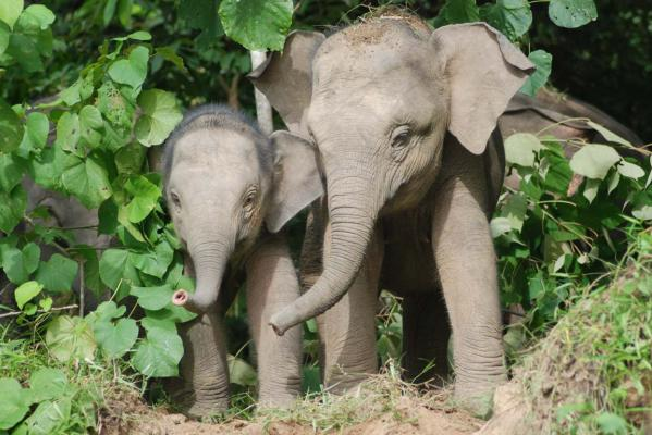 Kiwi elephant researcher up to the tusk  science  Stuff