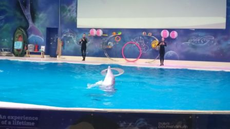 Photo of Dubai Dolphinarium - Dubai - United Arab Emirates by Sushma Neeraj