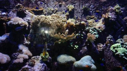 Photo of The Lost Chambers Aquarium - Dubai - United Arab Emirates by Sushma Neeraj