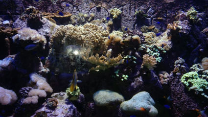 Photo of The Lost Chambers Aquarium - Dubai - United Arab Emirates by Sushma Neeraj