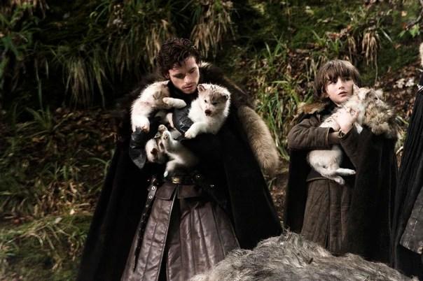 robb-bran-direwolf-pup