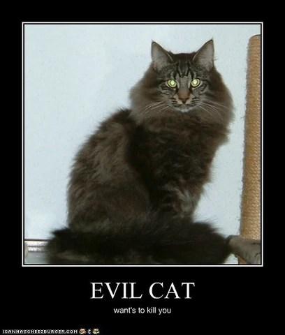 Evil Cat Pictures 84