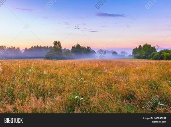 vibrant landscape &