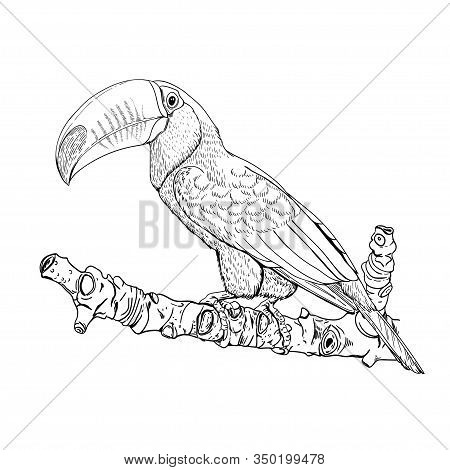 Black White Drawing Vector Photo Free Trial Bigstock