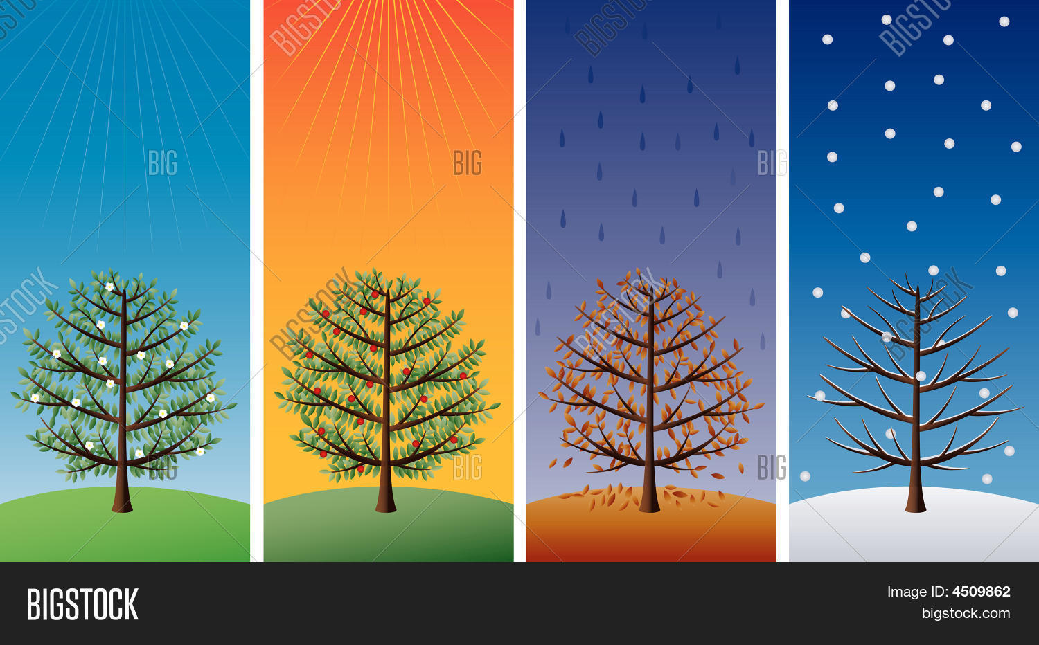 Four Seasons Trees Vector Amp Photo Free Trial