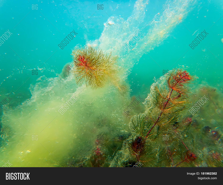 Freshwater Underwater Image & Photo (Free Trial) | Bigstock
