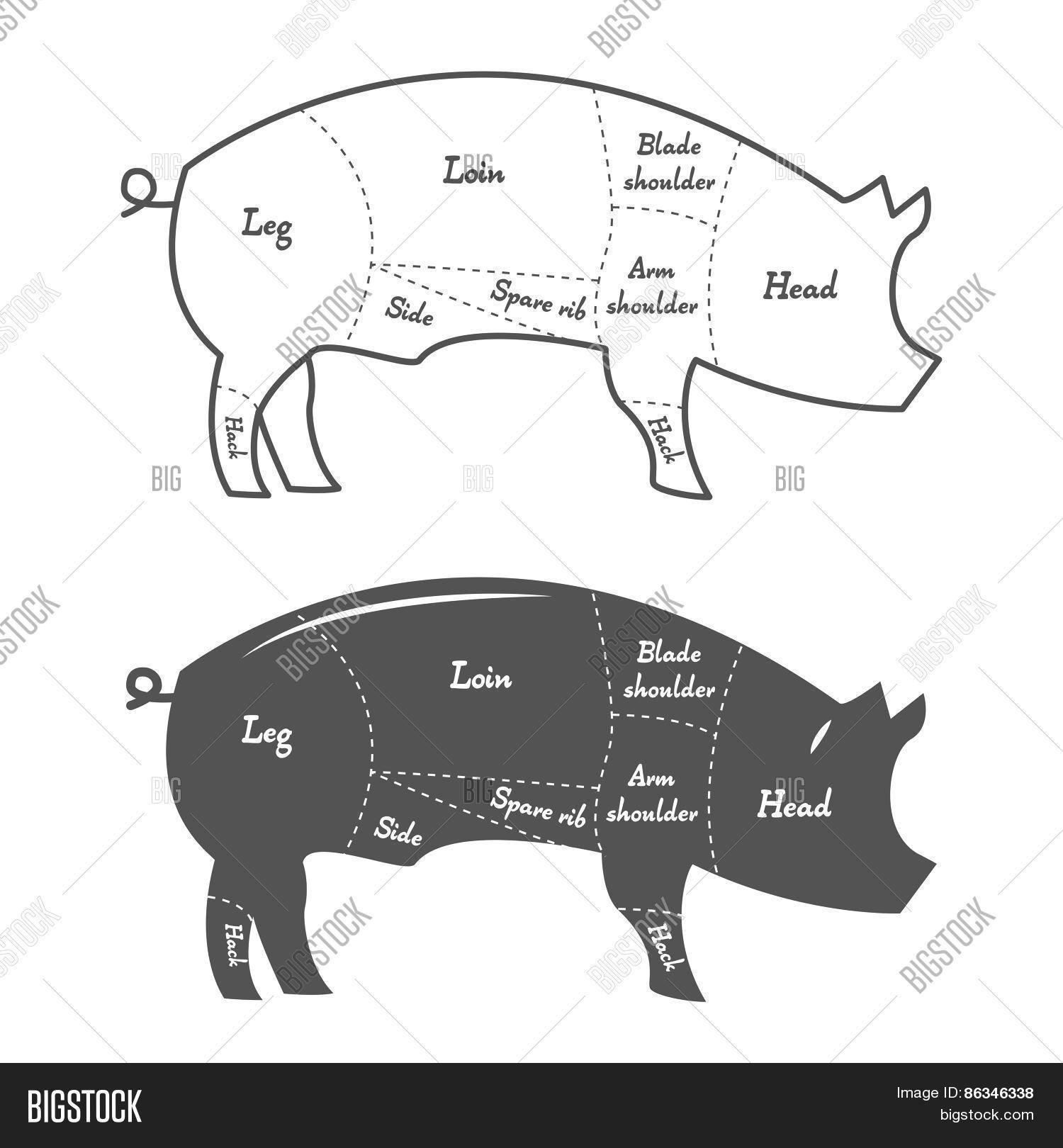 hight resolution of detailed illustration or chart of pork cuts