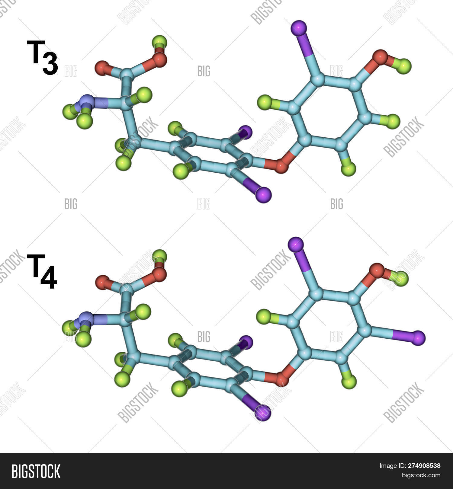 Molecules Thyroid Image & Photo (Free Trial) | Bigstock