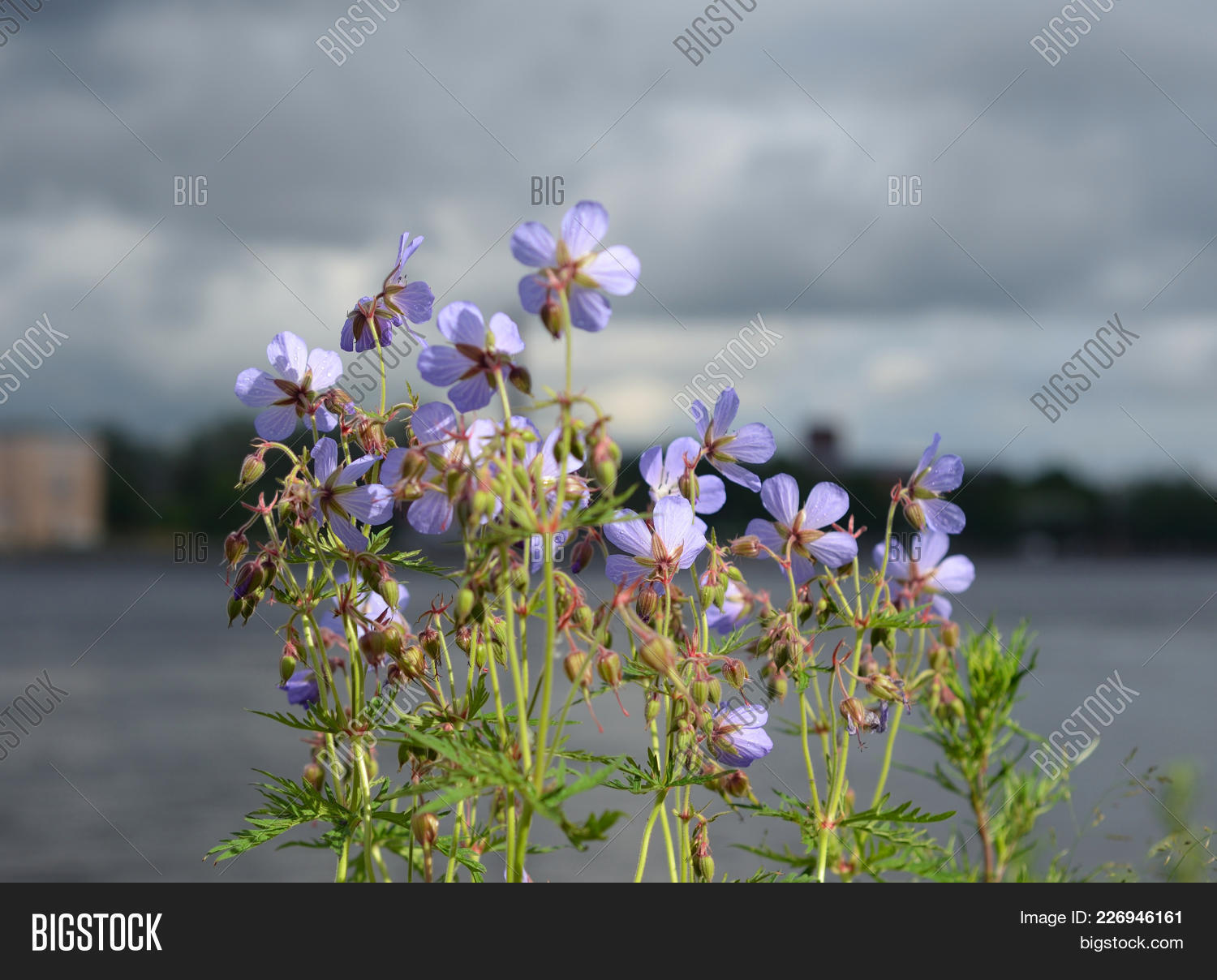 Bushes with violet PowerPoint Template - Bushes with violet ...