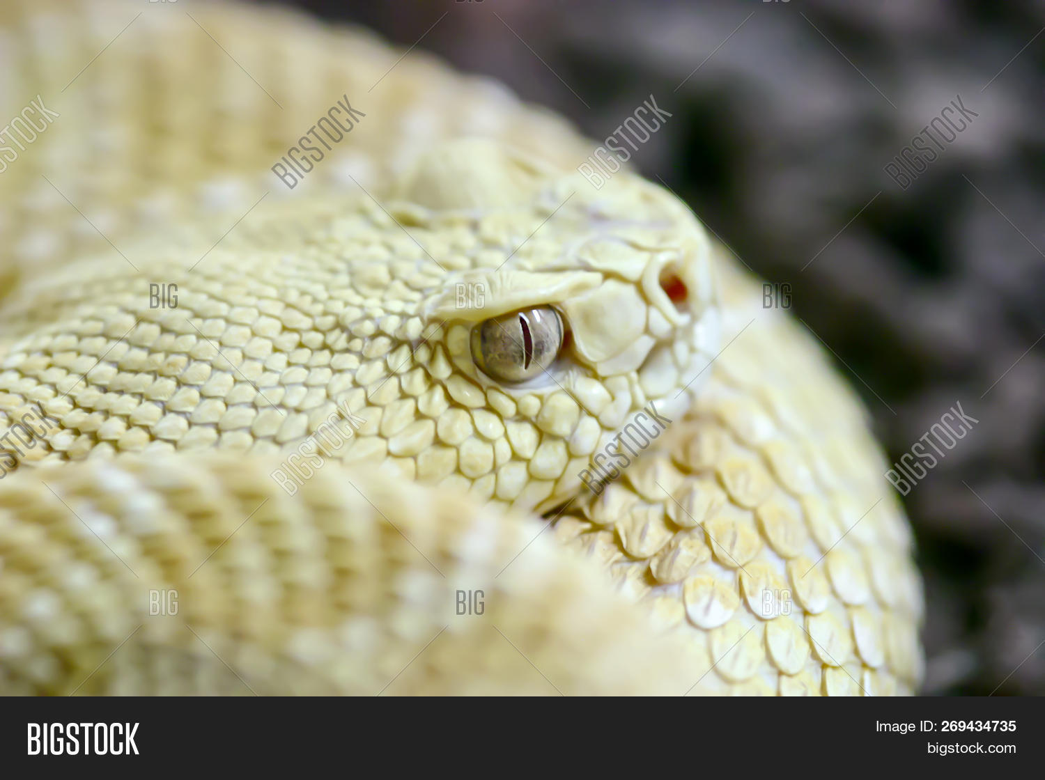 Snake Pictures To Color
