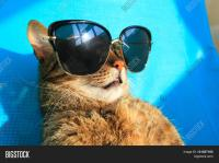 funny tabby cat wearing sunglasses relaxing on a beach ...