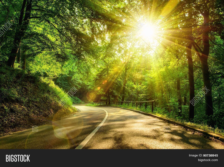 Scenic Road Forest Image Amp Photo Bigstock