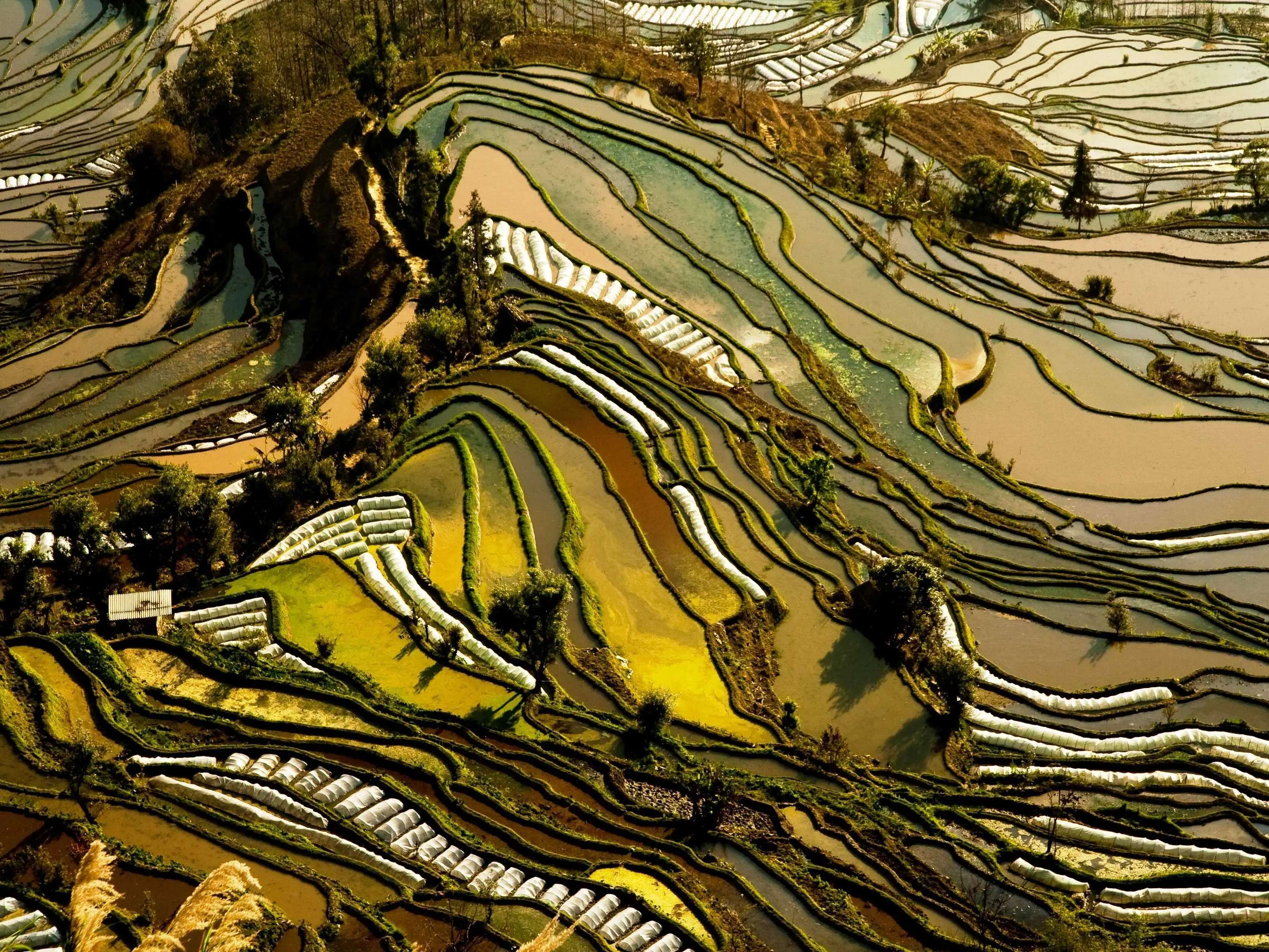 Peer down on the rice terraces of Yunnan, China.