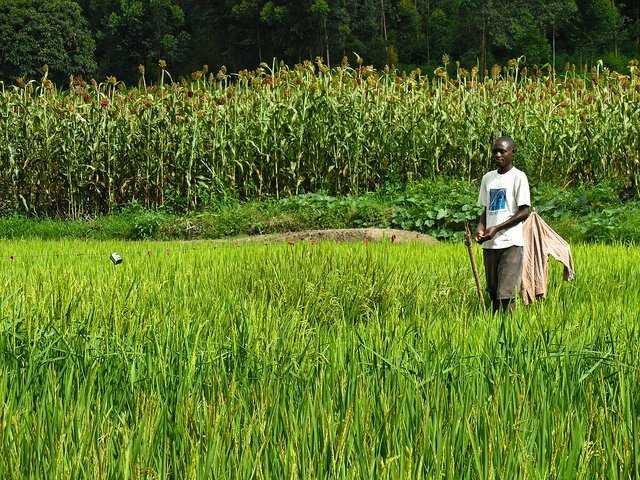 12. Rwanda