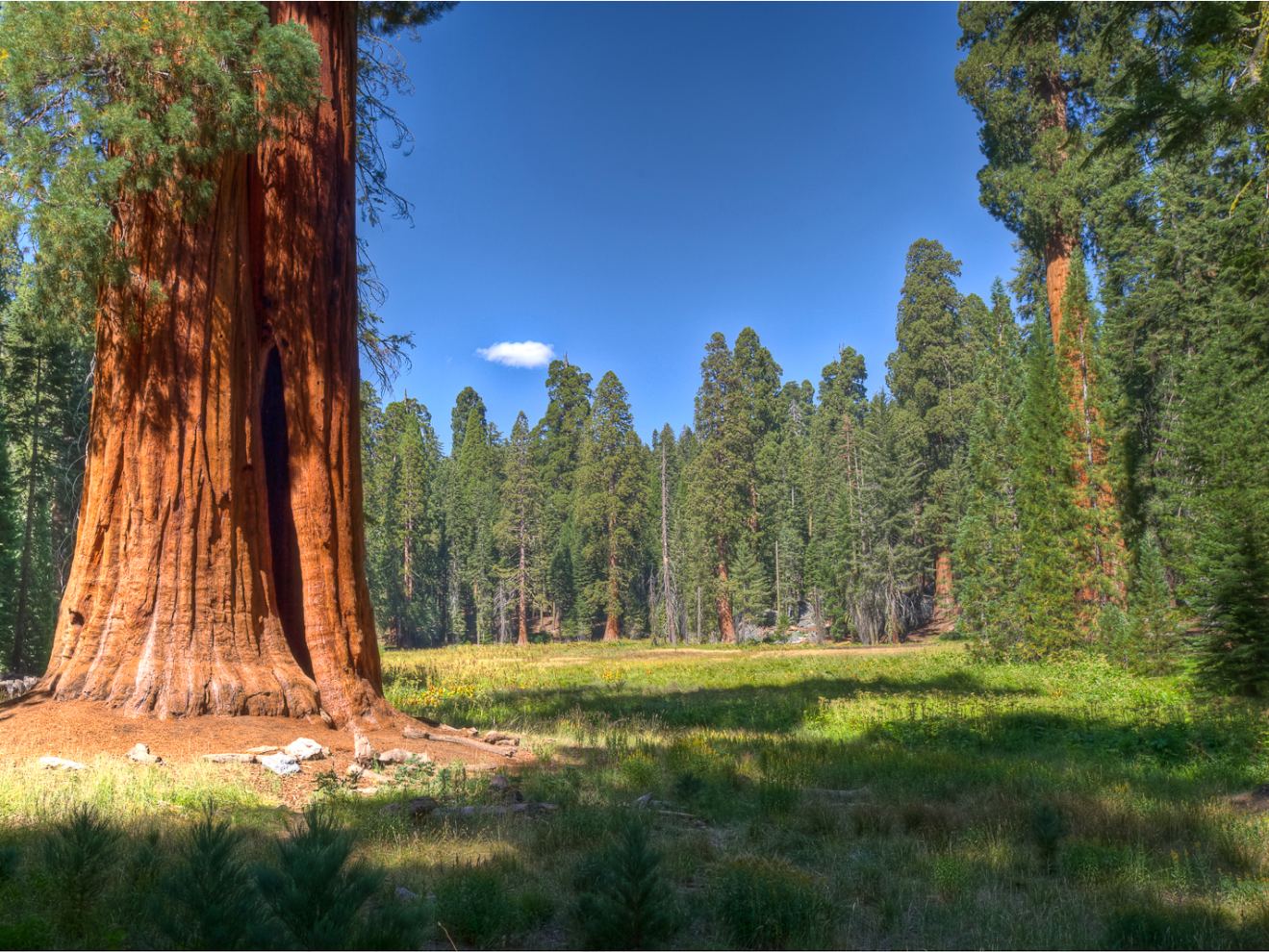 California's Sequoia National Park is home to a dramatic landscape of rugged foothills. Its famed giant sequoia trees have been becoming increasingly vulnerable due to higher numbers of wildfires.