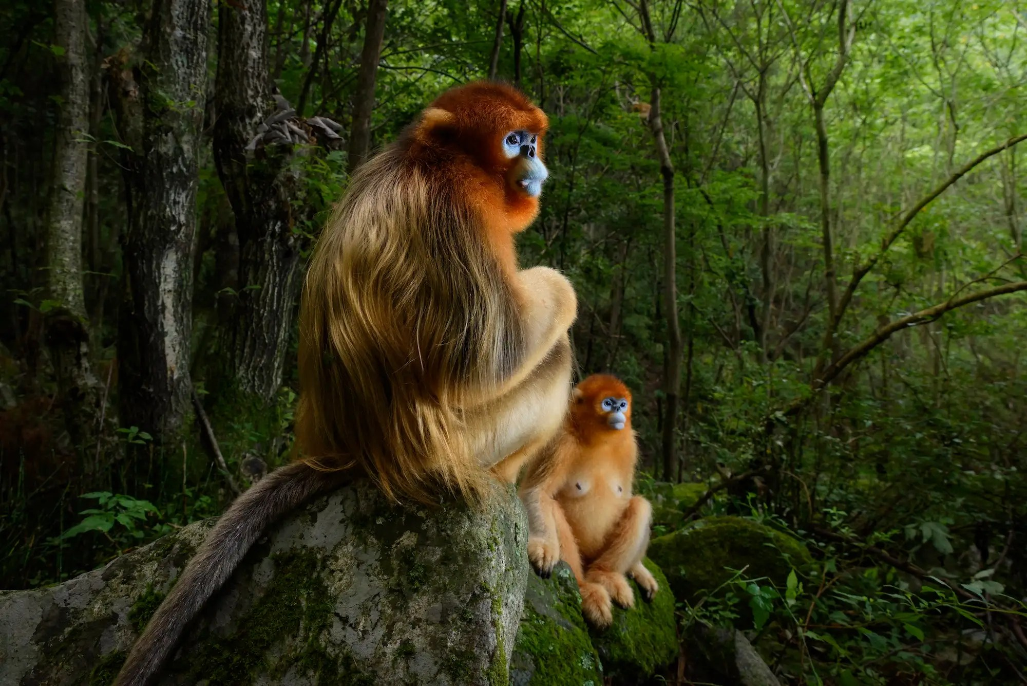 The most gorgeous wildlife photos of 2018 shine a light on nature's bizarre and wonderful beauty van oosten the grand prize winner is a professional nature photographer who runs a photography tour business with his wife he nabbed this photo of a golden couple in the qinling mountains of china