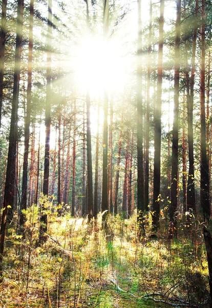 Hutan Berdasarkan Lingkungannya