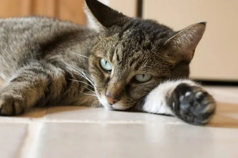 ᐈ Weary stock images, Royalty Free weary photos | download on ...
