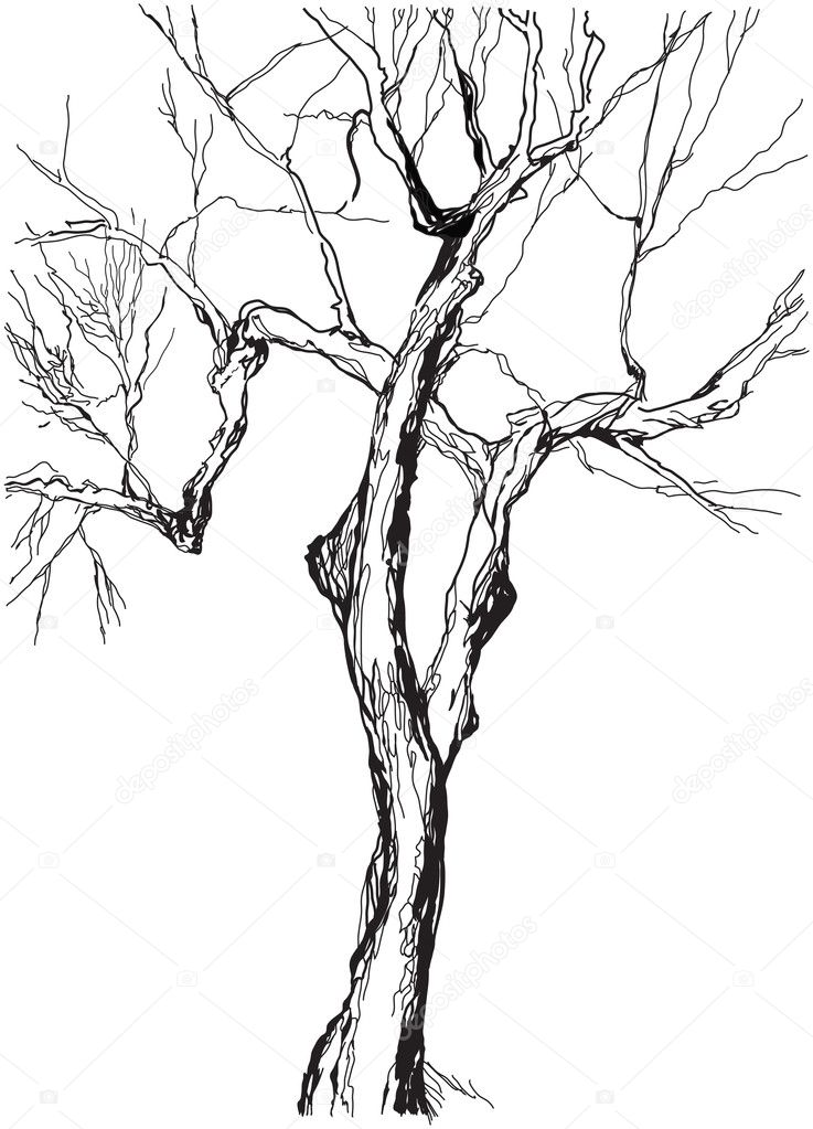 Drawing Collection Of 5 Trees Sketch Illustration Stock