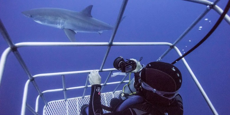 shark cage diving