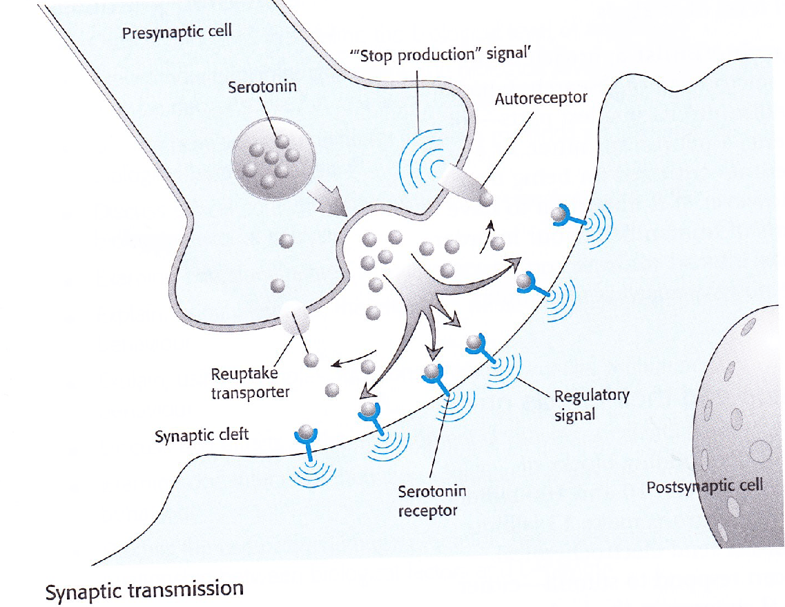 Synapse Diagram Psychology