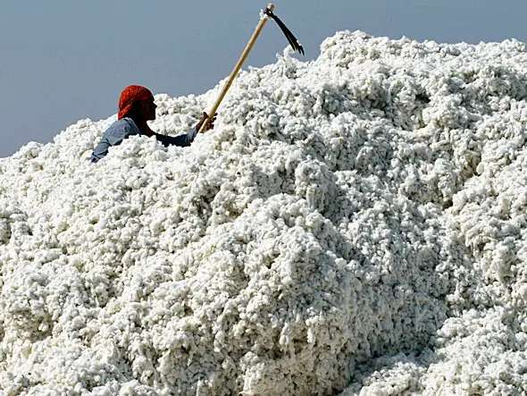 The outlook for cotton is negative because of increased global production and soft demand