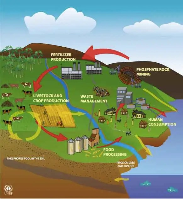 Phosphorus (P) is essential for life. Plants absorb it from fertilized soil, and then animals absorb it when they eat plants (and each other). When the plants and animals excrete waste or die, the phosphorus returns to the environment. Eventually, given enough time, it gets compressed into rock at the bottom of the ocean.