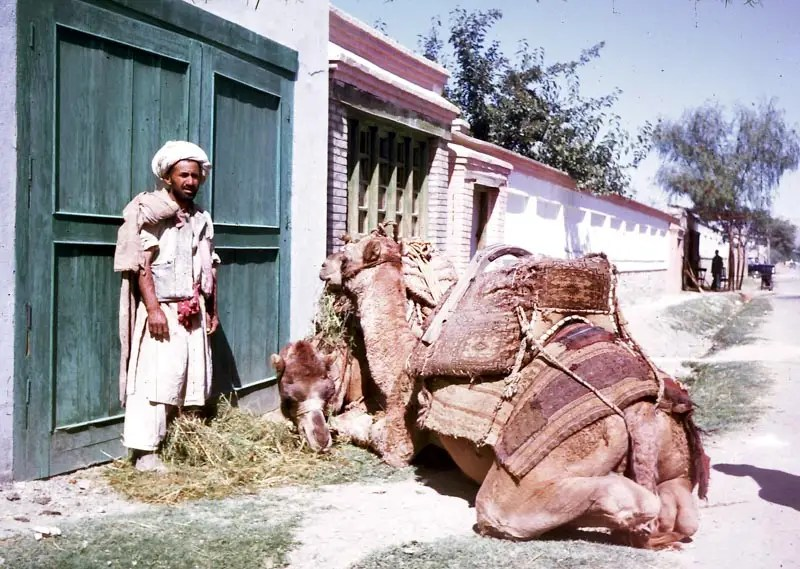 While urban Afghanistan became modern, rural Afghanistan contained these quaint scenes.