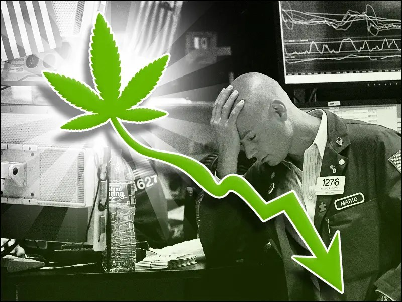 The Great Marijuana Crash Of 2011  Business Insider