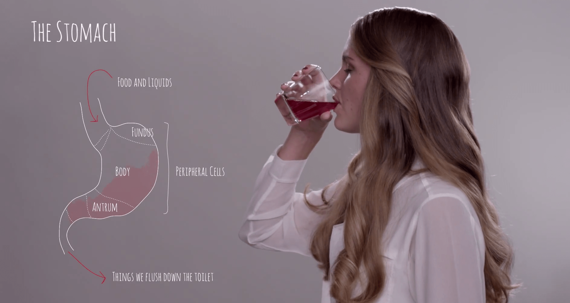 We digest soda quickly and easily without feeling full. Of course, genetics also has to do with how each person interacts with sugar.