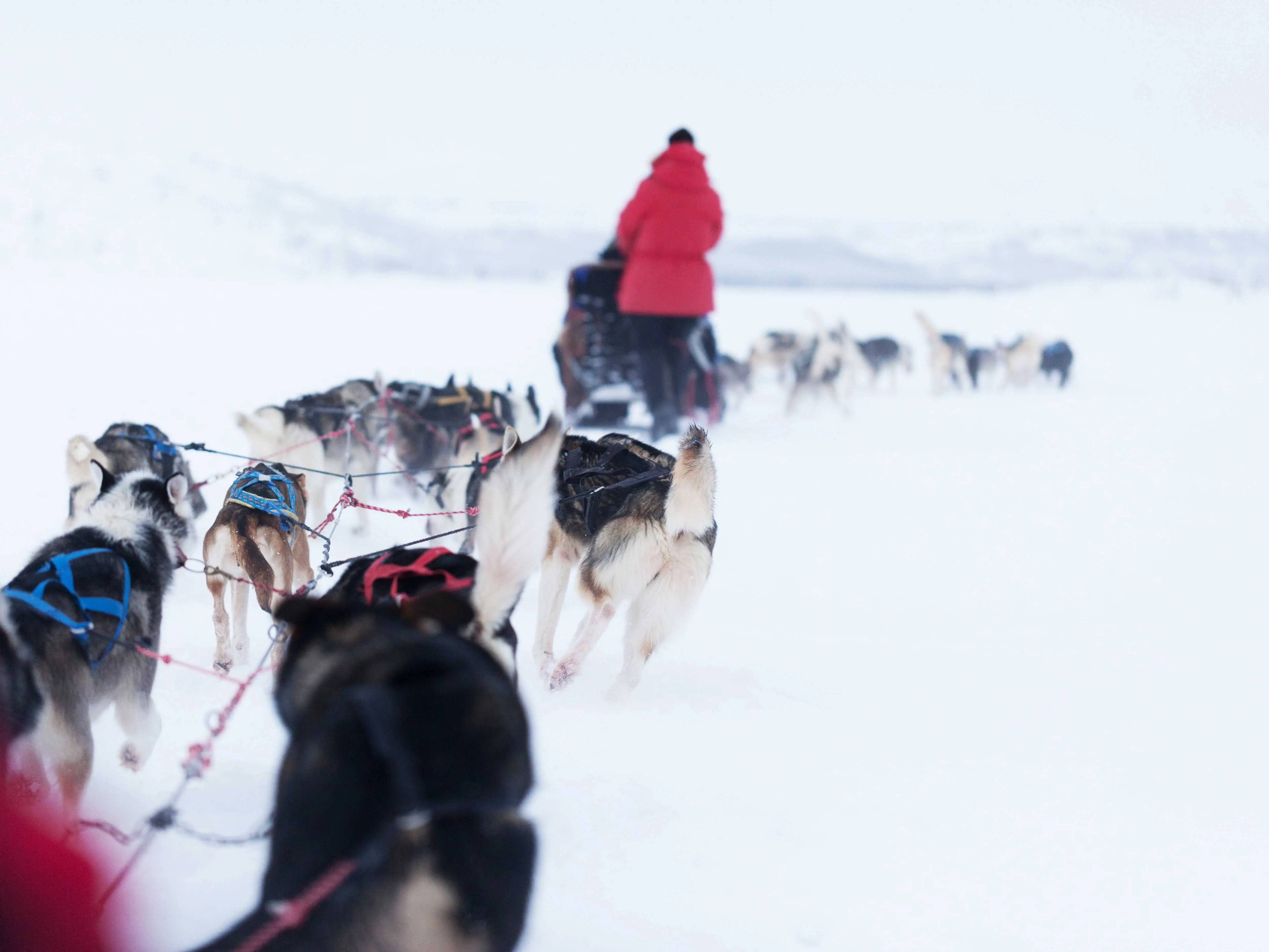 Ride a dogsled through the backcountry of Sweden.