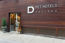 Pets Hotel Brings Luxury Dogs - Business Insider
