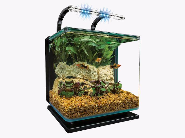 The best betta fish tank