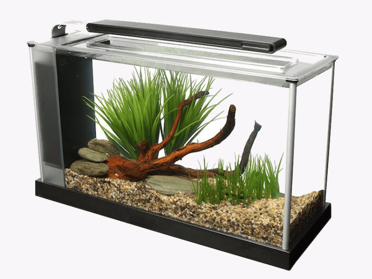 The best fish tank with less than 10 gallons