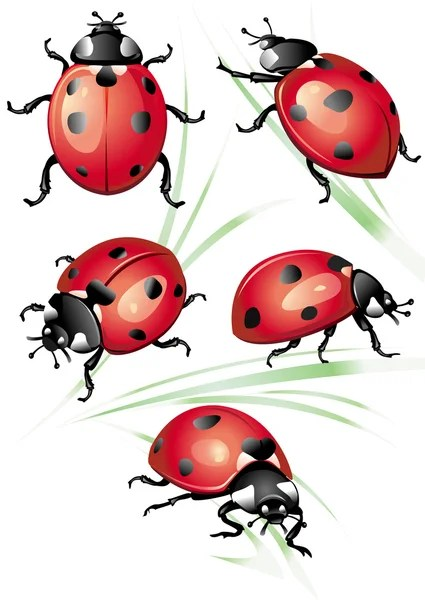 Ladybug Flying Drawing : ladybug, flying, drawing, Ladybug, Vector, Images,, Royalty-free, Vectors, Depositphotos®