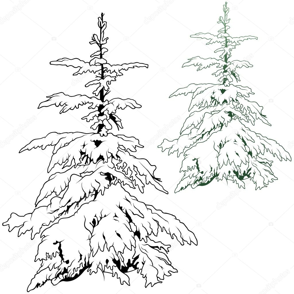 Snow Covered Conifer